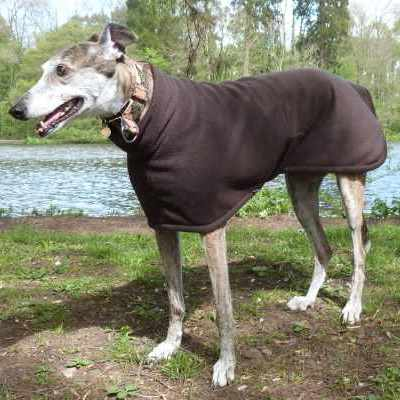 Euro Greyhound Coats Fleece In Dark Chocolate Brown