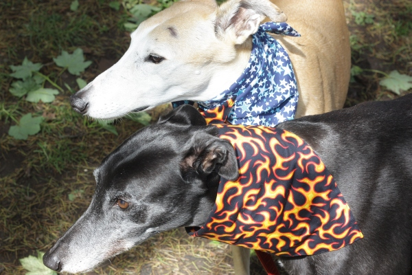 greyhound bandana flames design