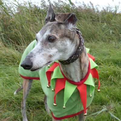 Christmas Elf Coat for Greyhounds