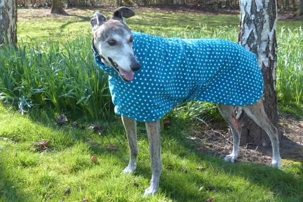 greyhound fleece coat in teal spot