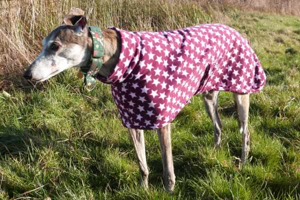 greyhound micro fleece coat in very berry star design