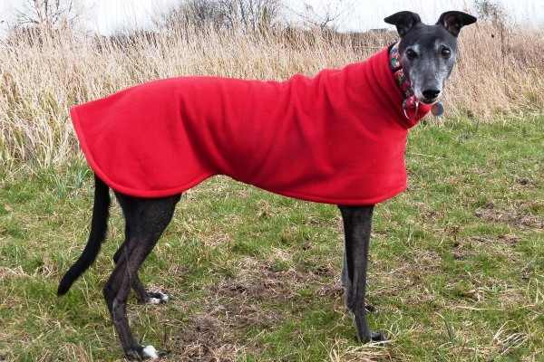 greyhound fleece coat bright red design