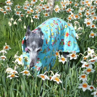 greyhound fleece coat in owls fabric