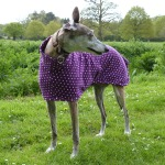 greyhound fleece coat in purple spot design