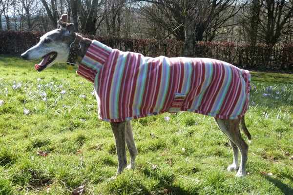 greyhound lurcher fleece coat in raspberry stripes design