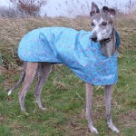 Raincoat for Greyhounds in turquoise rose