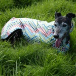 greyhound raincoat five star general design