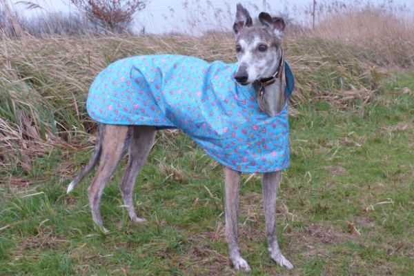 Greyhound Raincoat in Turquoise Rose Fabric from Milgi Coats